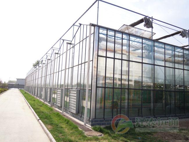 大棚设计-覆盖材料-配套设施-连栋温室,温室大棚,温室